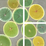 Lemons and Limes 2