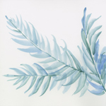 Pale Blue Fern