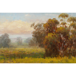 Eucalyptus Meadow