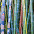 Bamboo Thicket 2